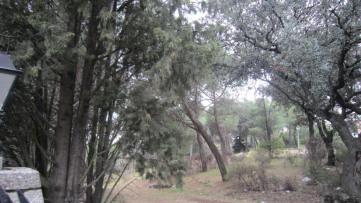 Urban plot in La Moraleja - Gilmar