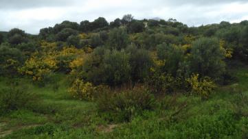 Urban plot in Estepona Golf - Gilmar
