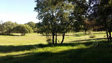 Finca con encanto a 20 minutos de Sevilla - Gilmar