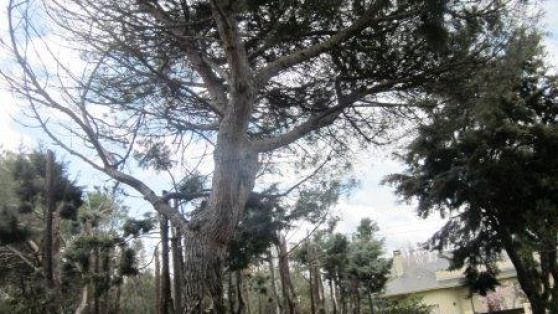 Venta de Chalet Independiente en Galapagar - Gilmar_